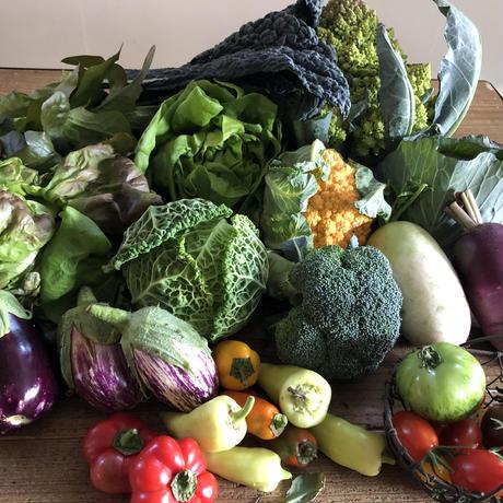5月の野菜詰め合わせ(100サイズ)