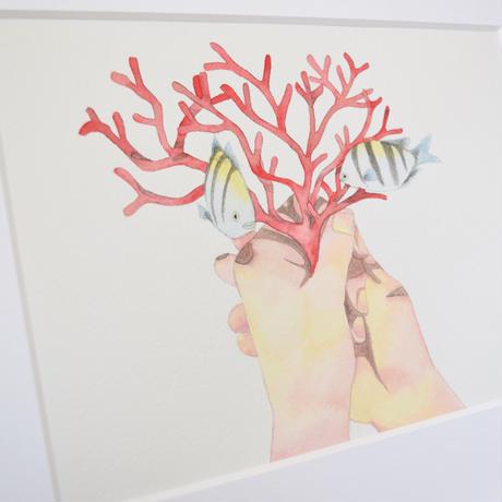 ドローイング原画 Coral/親美姫