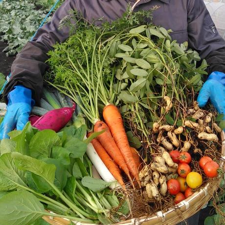 季節の野菜セット(Lサイズ/3~4人分)
