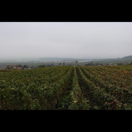 ローラン・シャルリエ  ル・ブリュット・ミレジム  AOP シャンパーニュ/Laurent Charlier Le Brut Blanc de Blancs AOP Champagne 2013
