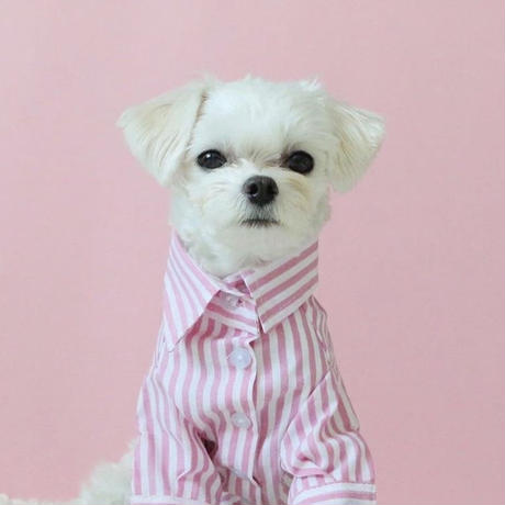 stripe shirt . [ pink ]