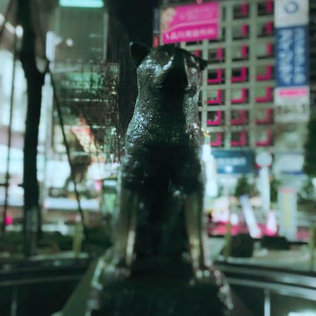 『ルポ渋谷』01-ニュージャーナリズム的視点 commentary(何処に行っても犬に吠えられる)