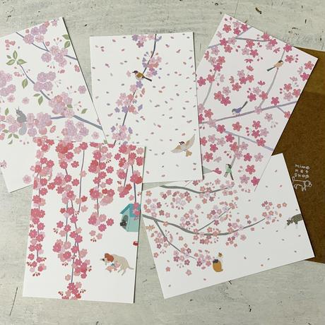 桜ポストカードセット