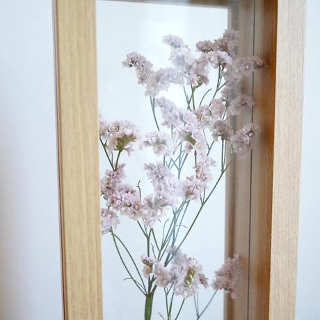 花言葉の植物標本フレーム   / スターチス(ピンク)