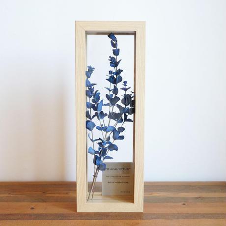 花言葉の植物標本フレーム  / 染めユーカリ(ブルー)