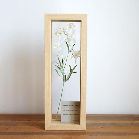 花言葉の植物標本フレーム / デルフィニウム(ホワイト)