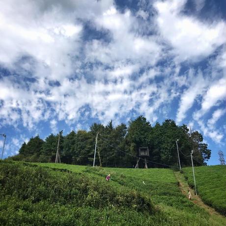 [受付終了しました]2019年9月21日(土)開催決定!秋の茶摘み体験「秋だ!茶摘みだ!発酵だ!日本の紅茶をつくります編」
