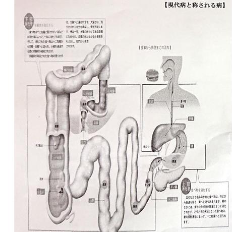 さらにパワーアップして新登場!菌の発見から20年!スゴい!微生物の力!第2の脳「腸能力」を高めてイキイキ毎日!☆「ハッピーライフ」15g