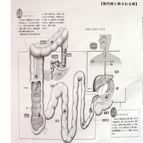 """さらにパワーアップして新登場!地球外から飛来してきたウワサの""""スゴい菌!""""スーパー微生物☆28種類のアミノ酸を腸内で生成…!「ハッピーライフ」 お試しサンプル5g (約10日分)"""