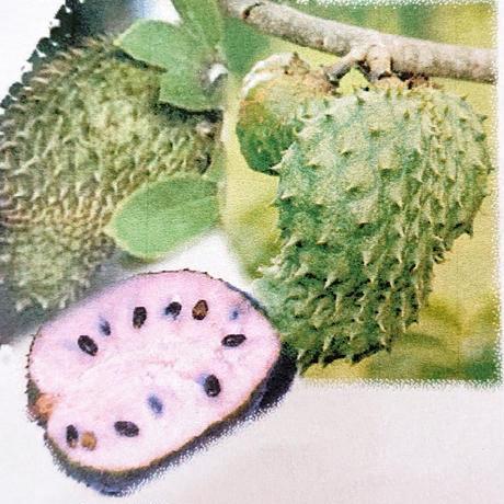 ポリフェノール、ビタミン、ミネラル豊富なベトナム生まれのスーパーフード!現地の医師と共同開発し日本で製品化したミラクル果物!私、MIRIAも日々、良好実感中…!「サルサップ」150g