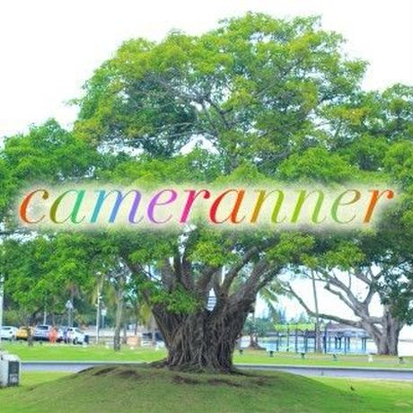 大きな木の写真
