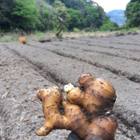 鰹乃國の生姜【生姜の粉・乾燥パウダー】10g [潮と空農園] made in 高知県