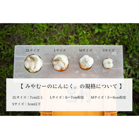 【極】にんにく [みやむ〜のにんにく] made in 青森県