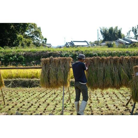 天日干しコシヒカリ 玄米5kg[minimal life] made in 奈良県