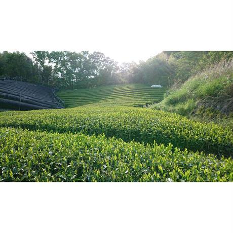 かぶせ茶  [加茂自然農園] made in 京都府