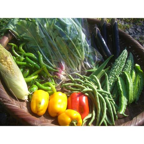 自然農野菜セット定期便 [BIG FAMILY FARM]