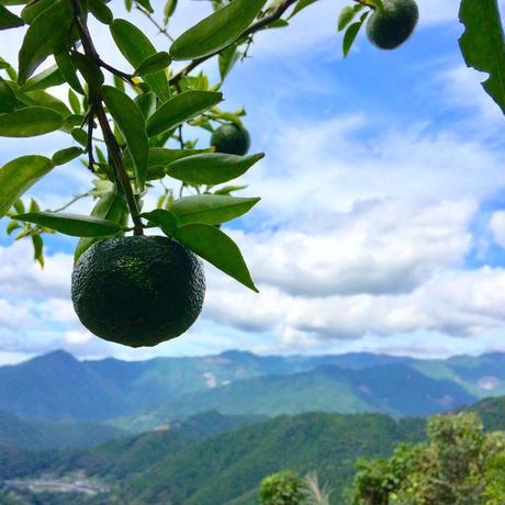 晩夏の青柚子 10個 [潮と空農園] made in 高知県