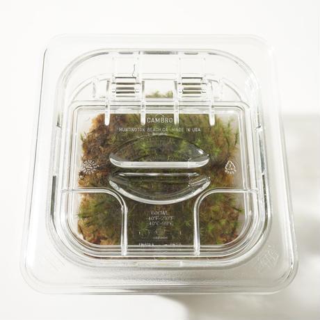 Sealed Plants 2A