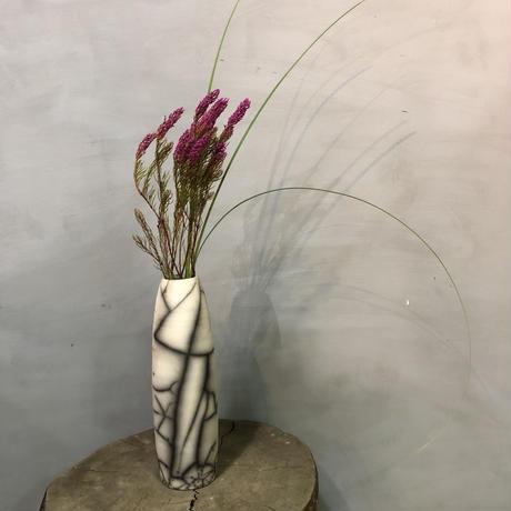 DOMANI selfoss 30 塊根植物 コーデックス 多肉植物