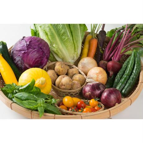 季節のおまかせ野菜セット11種類(標準Mサイズ)/長野県