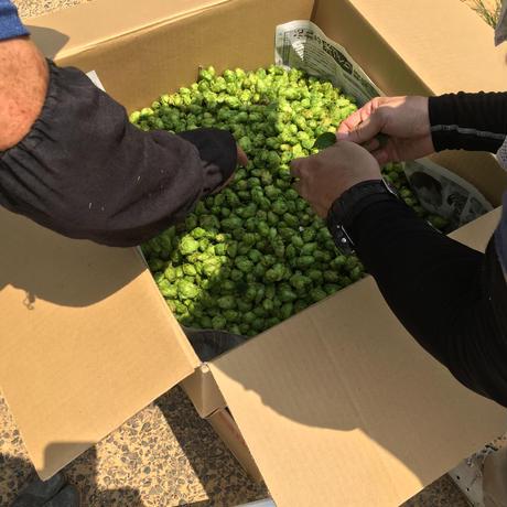 ペールエールタイプの地ビール「HIbiki Fresh Hops 若松エール」330ml 10本箱入り