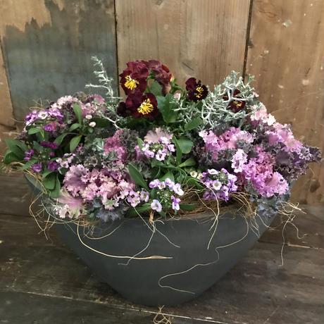 ラウンド樹脂鉢①(ムラサキの葉牡丹使用)