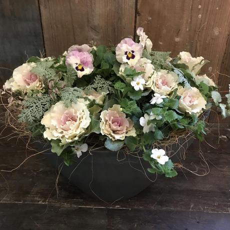 ラウンド樹脂鉢②(ホワイトの葉牡丹使用)