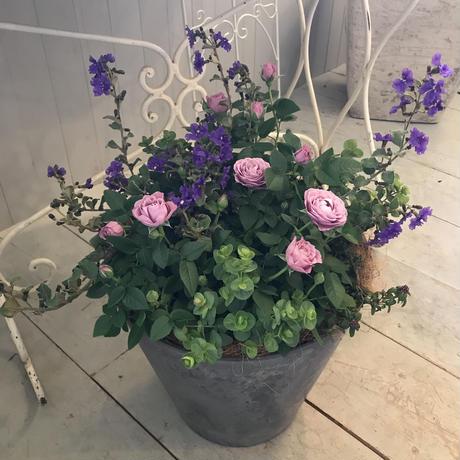 グレーの樹脂鉢の寄せ植え