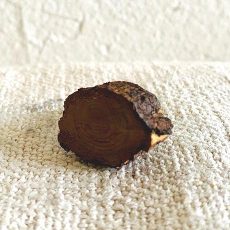 houti 小さな小さな木の切り株にのったミニミニくまごろう