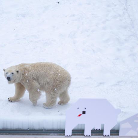 ほっかいしこう社|冬と雪景色の北海道ポストカードセット