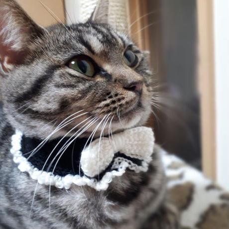 Ribbon Collar(リボンカラー)