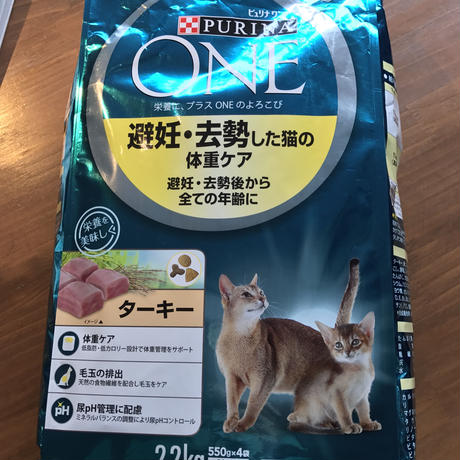 保護猫たちへのごはん支援