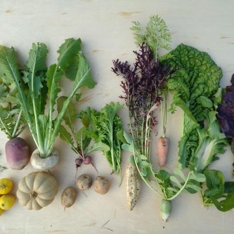 セミオーダー野菜セットL (1ヶ月定期便)