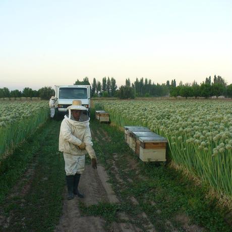 純粋百花蜂蜜 アルゼンチン産 300g