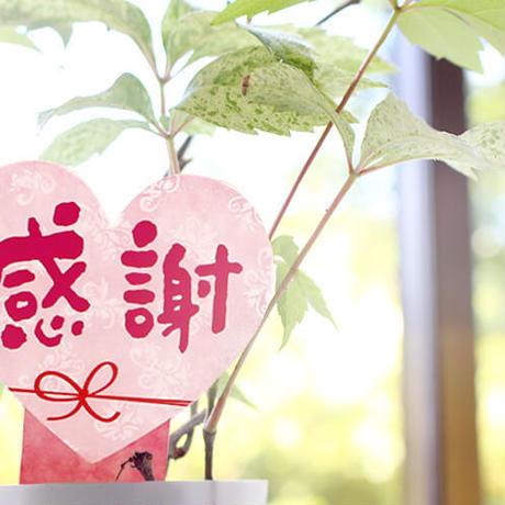 お花のラベルお試し用【5シート入】無地A4用紙 花苗・野菜苗用挿しラベル レーザープリンタ用両面印刷可