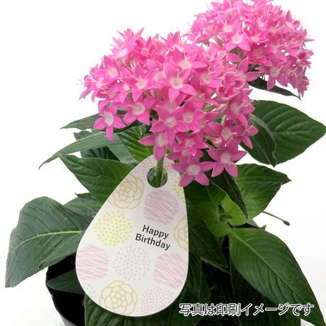 お花のラベルP 花束吊下げラベル 無地A4用紙14面付【20シート入/280枚分】