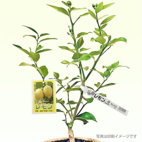 お花のラベル 品名タグ 無地A4用紙【20シート入】