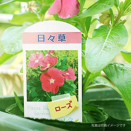 お花のラベルA 花苗・野菜苗用挿しラベル 無地A4用紙14面付【20シート入/280枚分】