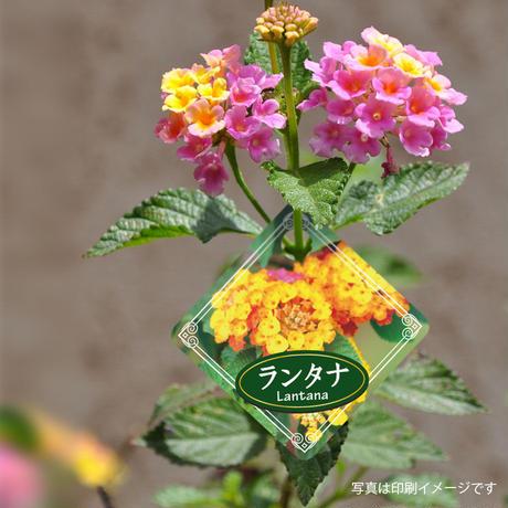 お花のラベルQ 花束吊下げラベル 無地A4用紙14面付【20シート入/280枚分】