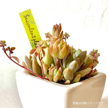 お花のラベルC 花苗・野菜苗用挿しラベル 無地A4用紙20面付【20シート入/400枚分】