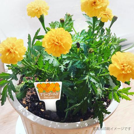 お花のラベルM 無地A4用紙 花苗・野菜苗用挿しラベル 【20シート入】