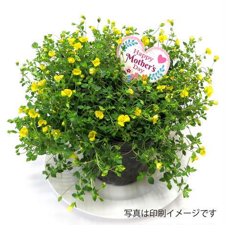 お花のラベルG 無地A4用紙 花苗・野菜苗用挿しラベル 【20シート入】