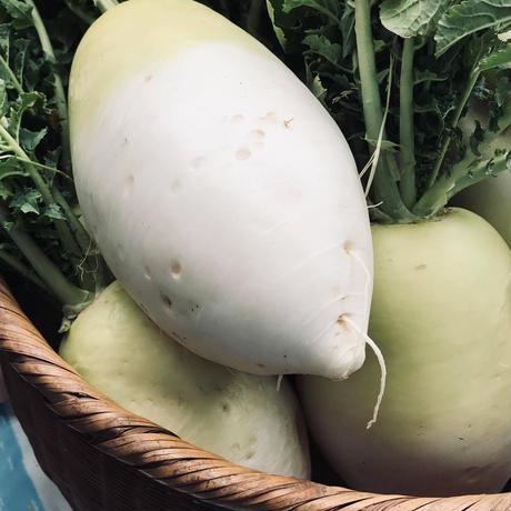 定期 ユニーク野菜宅配便S  限定10セット