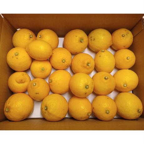 『キズ[✓]モン。』キズのある国産レモン【4kg:送料込】