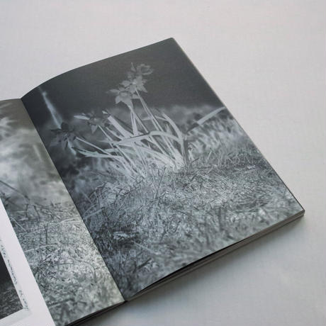 Rein Jelle Terpstra / Dark Dunes
