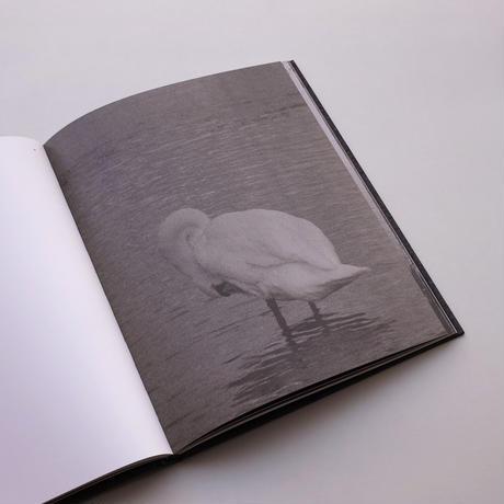Byung-Hun Min / Des Oiseaux
