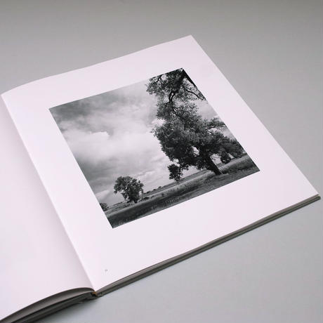 Robert Adams / Cottonwoods