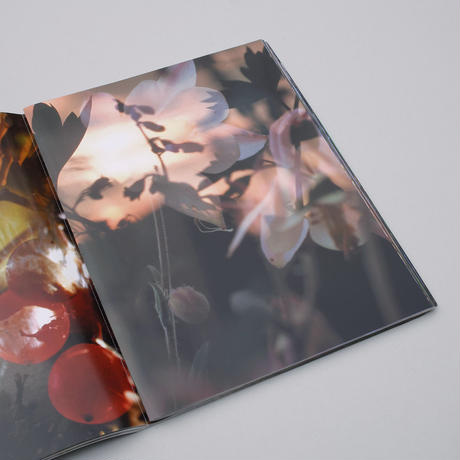 Peter Fischli and David Weiss / Flowers and Mushrooms
