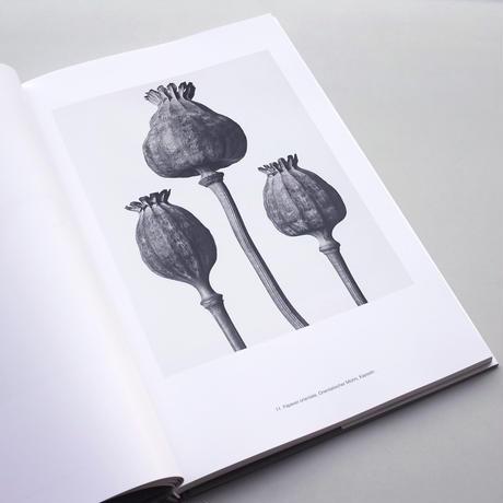 Karl Blossfeldt / Masterworks