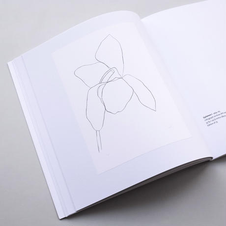 Ellsworth Kelly / Plant Lithographs